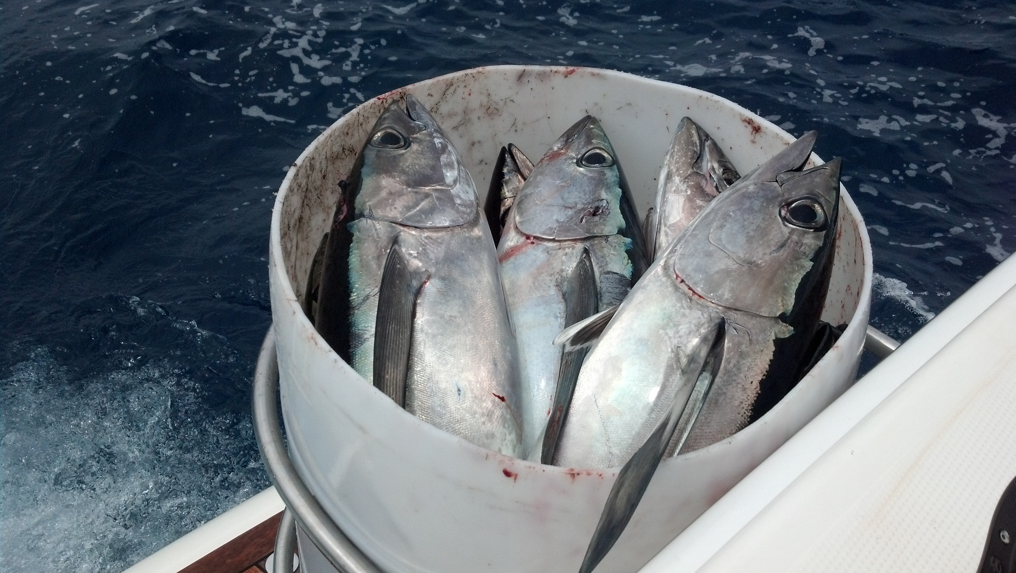 Tuna dog offshore blog for Is tuna fish good for dogs